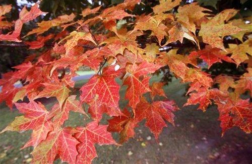 mainefoliage2